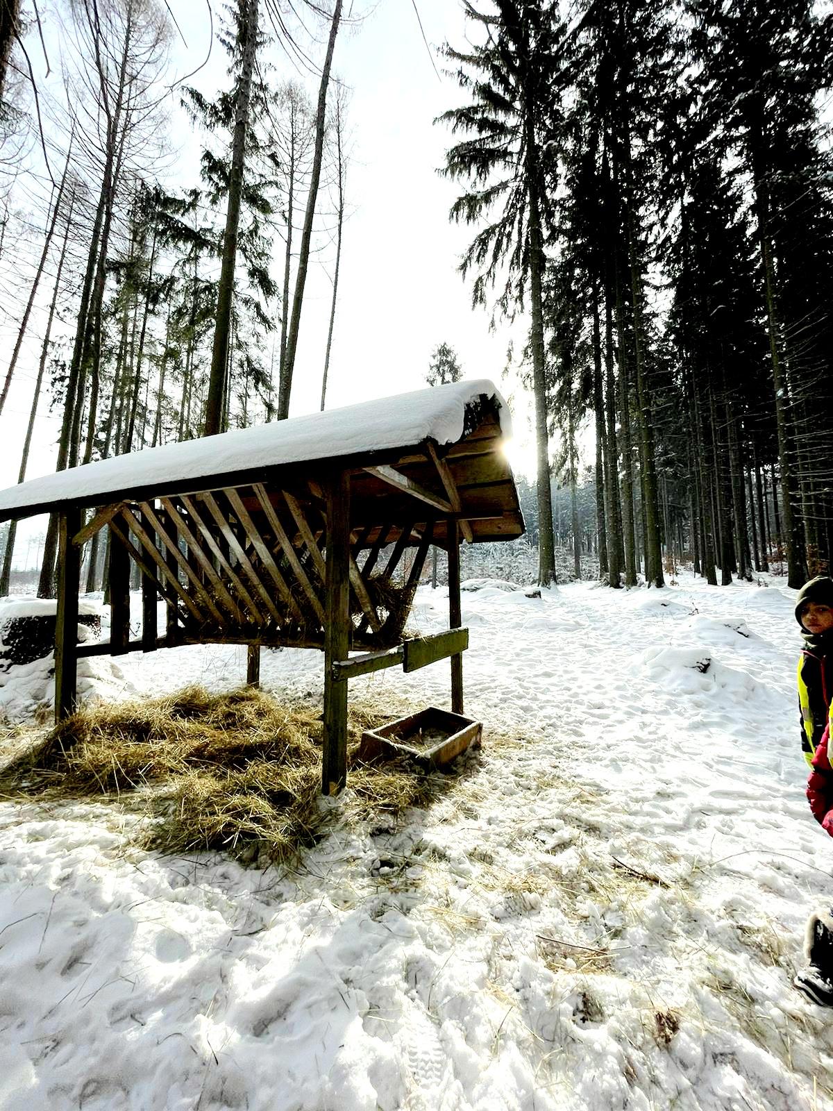 únor 2021- Stojí v lese domek malý...